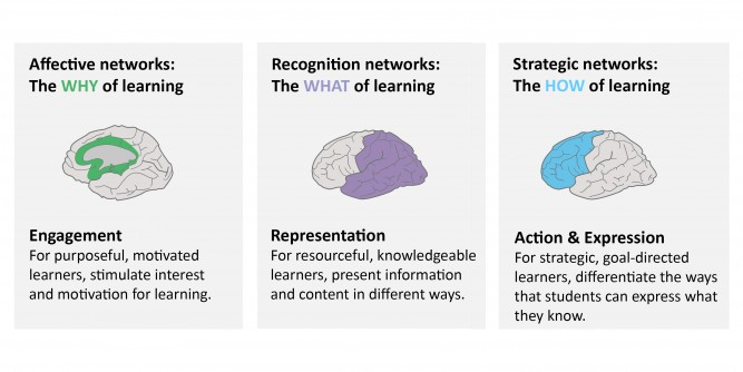 3 Primary brain networks