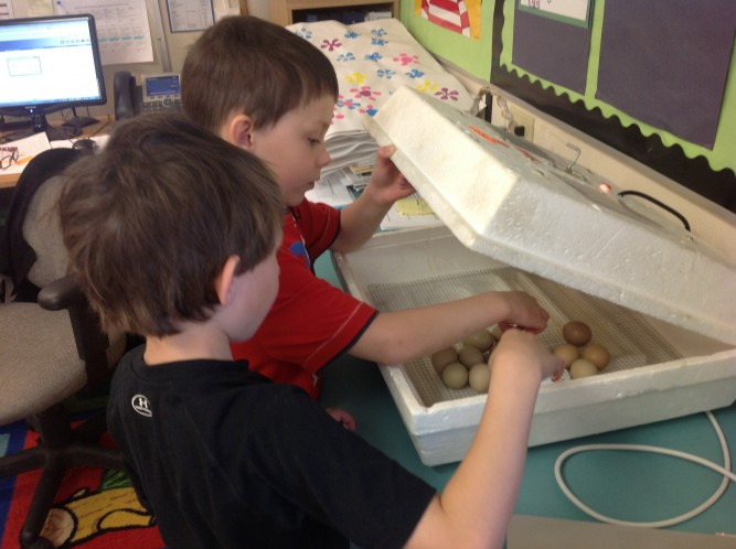 Counting eggs